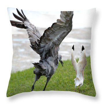 Sandhill Chasing Ibis Throw Pillow by Carol Groenen