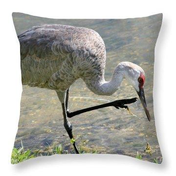Sandhill Crane Balancing On One Leg Throw Pillow by Sabrina L Ryan