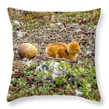 Sandhill Crane Chick Throw Pillow by Steven Ralser