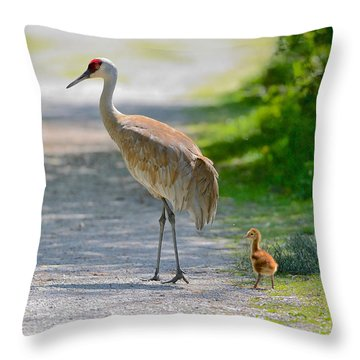 Sandhill Crane Colt Throw Pillow