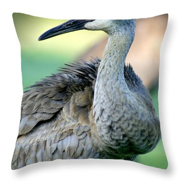 Sandhill Crane Throw Pillow by E B Schmidt