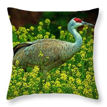 Sandhill Crane Throw Pillow by Elizabeth Winter
