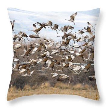 Sandhill Crane Explosion Throw Pillow