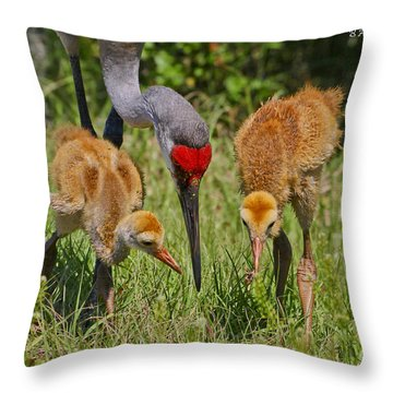 Sandhill Crane Family Feeding Throw Pillow