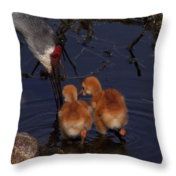 Sandhill Crane Feeding Chicks In Water Throw Pillow