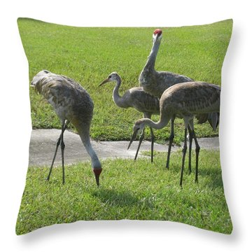 Sandhill Cranes Family Throw Pillow by Zina Stromberg