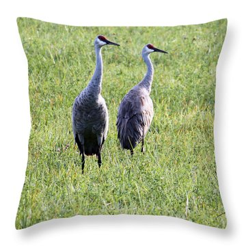 Throw Pillow featuring the photograph Sandhill Cranes In Wisconsin by Debbie Hart
