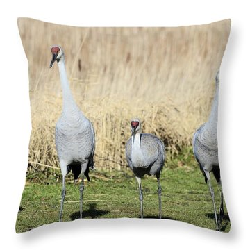 Sandhill Cranes Street Gang Throw Pillow