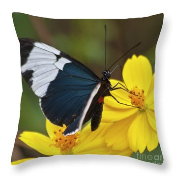 Sapho Longwing Yellow Oriented Throw Pillow by Heiko Koehrer-Wagner