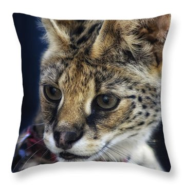 Savannah Jungle Cat Throw Pillow