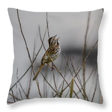 Savannah Sparrow Throw Pillow by Marty Saccone