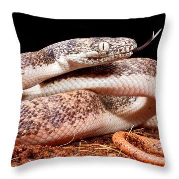 Savu Python In Defensive Posture Throw Pillow