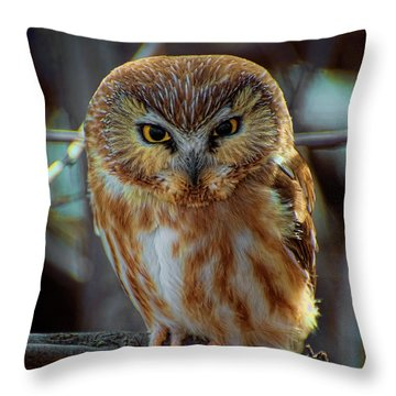 Throw Pillow featuring the photograph Saw-whet Owl by Britt Runyon