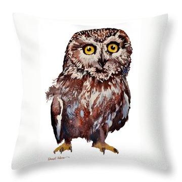 Da148 Saw Whet Owl Daniel Adams Throw Pillow