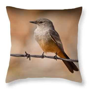 Say's Phoebe On A Barbed Wire Throw Pillow by Jeff Goulden