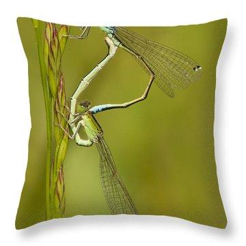 Scarce Blue-tailed Damselfly Pair Throw Pillow