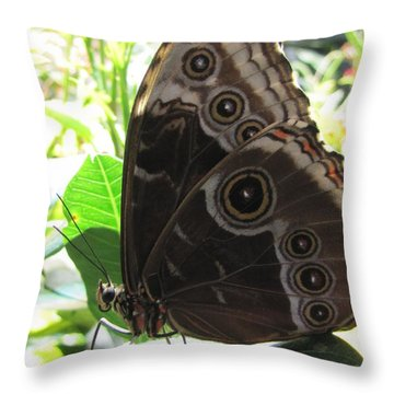 Scarce Morpho Throw Pillow