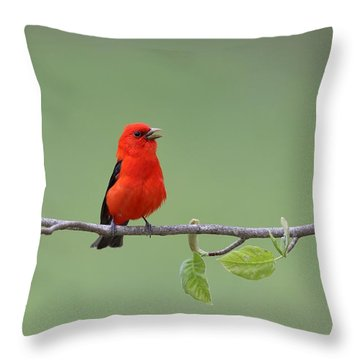 Scarlet And Green Throw Pillow