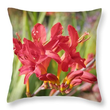 Scarlet Beauty 1 Throw Pillow