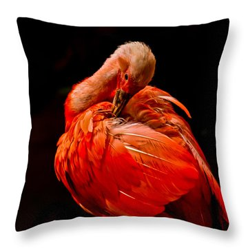 Scarlet Ibis Throw Pillow