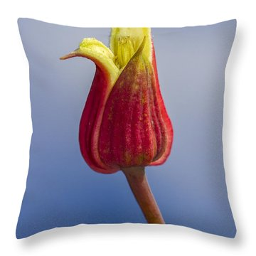 Scarlet Leatherflower Throw Pillow
