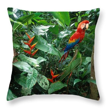 Scarlet Macaw Throw Pillow by Art Wolfe