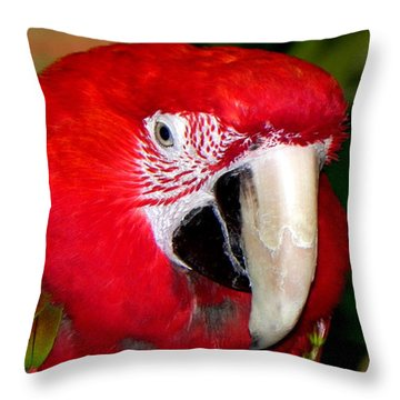 Throw Pillow featuring the photograph Scarlet Macaw by Bill Swartwout