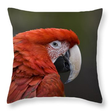 Scarlet Macaw Throw Pillow by David Millenheft