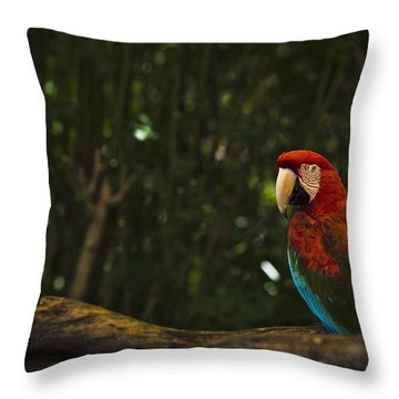 Scarlet Macaw Profile Throw Pillow