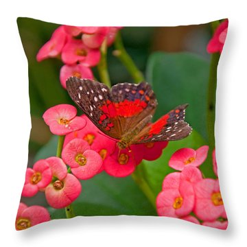 Scarlet Swallowtail Butterfly On Crown Of Thorns Flowers Throw Pillow