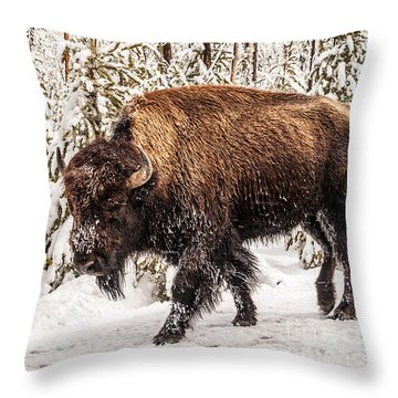 Scary Bison Throw Pillow by Sue Smith