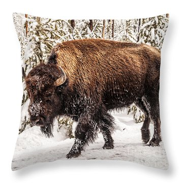 Scary Bison Throw Pillow