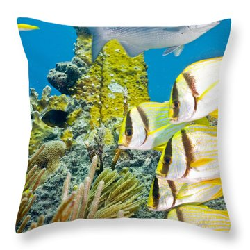 School Gathering Throw Pillow