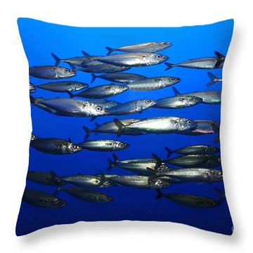 School Of Pacific Sardines 5d24927 Throw Pillow