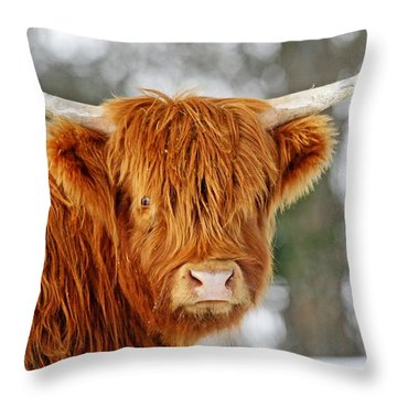 Scottish Highland Cow Throw Pillow by Michael Allen