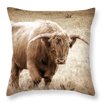 Scottish Highlander Bull Throw Pillow