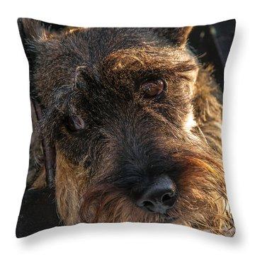 Scottish Terrier Closeup Throw Pillow by Jess Kraft