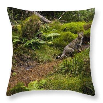 Scottish Wildcat And Domestic Cat Throw Pillow