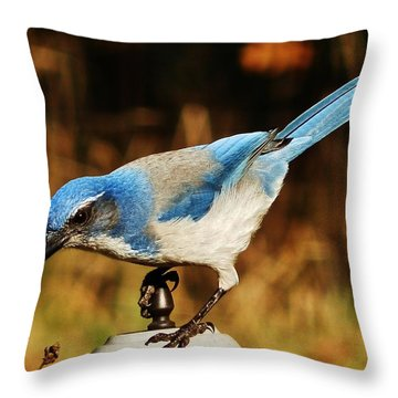 Scrub Jay Throw Pillow by VLee Watson