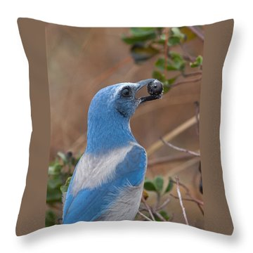 Throw Pillow featuring the photograph Scrub Jay With Acorn by Paul Rebmann