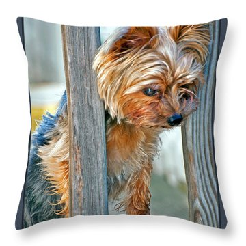Throw Pillow featuring the photograph Scruffy Yorkie by Donna Proctor
