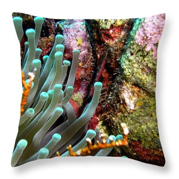 Throw Pillow featuring the photograph Sea Anemone And Coral Rainbow Wall by Amy McDaniel