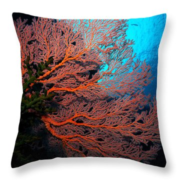 Throw Pillow featuring the photograph Sea Fan by Aaron Whittemore