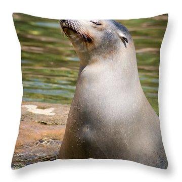 Sea Lion Portrait Throw Pillow