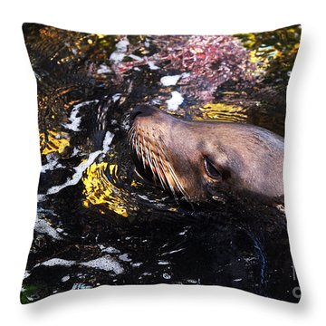 Sea Lion Posing For A Headshot Throw Pillow