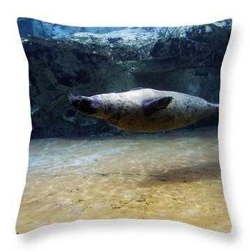 Throw Pillow featuring the photograph Sea Lion Swimming Upsidedown by Verana Stark