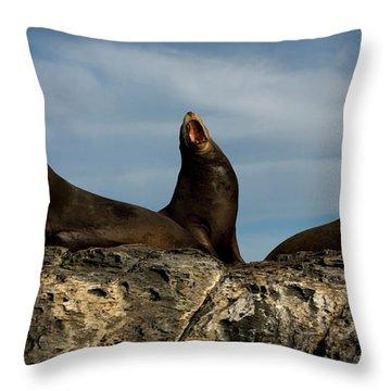 Sea Lions Sit On Coronado Island Throw Pillow
