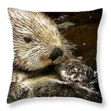 Sea Otter Throw Pillow