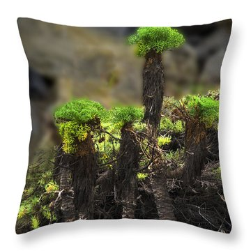 Throw Pillow featuring the photograph Sea Shore Forest by Joseph Hollingsworth