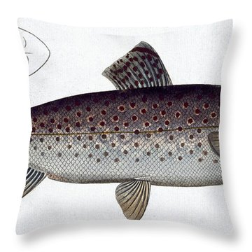 Sea Trout Throw Pillow by Andreas Ludwig Kruger